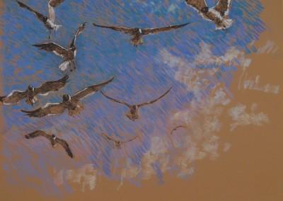 Gulls in a Blue Sky