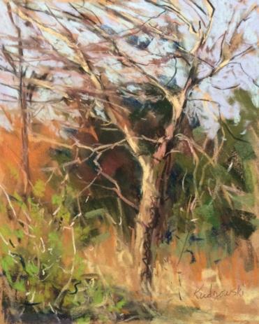 Tree at Cibolo Creek